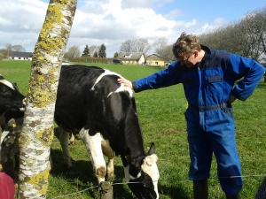 Bauer Jensen erzählt, warum in seiner Ochsenherde auch eine Kuh ist.