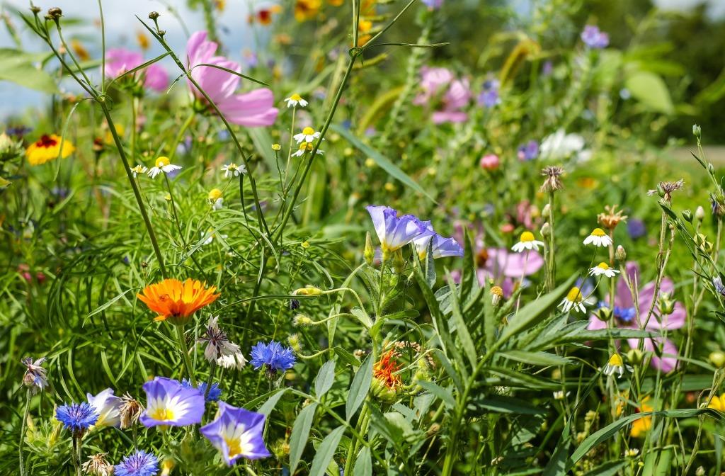 Mehr Blumen, mehr Insekten, mehr Vögel.